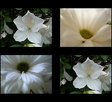 FLOWERS OF WHITE by ctheworld