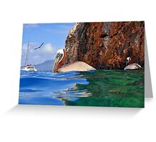 Pelicans at the Caves Greeting Card