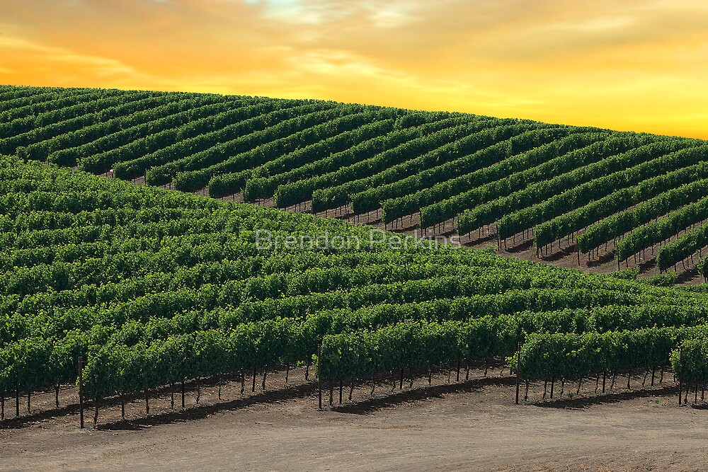 Golden Skies Over Napa Valley (California) by Brendon Perkins