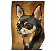 Chihuahua Portrait Poster