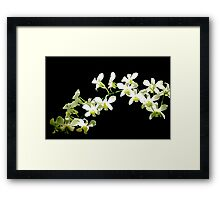 Streaming Orchids Framed Print