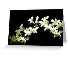 Streaming Orchids Greeting Card