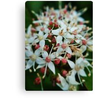 Garden flowers in bloom Canvas Print