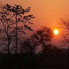 Assamese sunrise. by John Mitchell