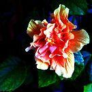 Wild Hibiscus by glennc70000