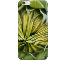 Sunflower ready to burst open iPhone Case/Skin