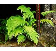 fern and rust Photographic Print