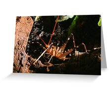 New Zealand Cave Weta Greeting Card