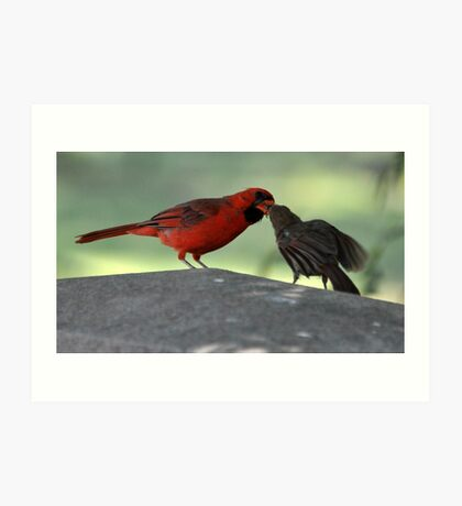 male cardnel sharing with femail Art Print