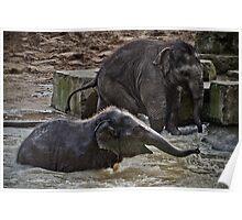 Baby elephants Poster