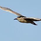 flying free night heron by gene mcfarland