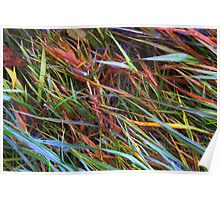 Rainbow Reeds Poster