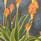 Aloes by Martha Mitchell