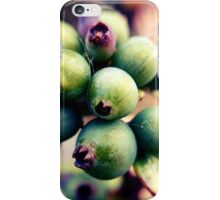 Honeysuckle buds iPhone Case/Skin