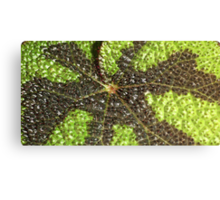 Begonia Rex Leaf Detail  Canvas Print