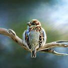 English-House Sparrow by Renee Dawson
