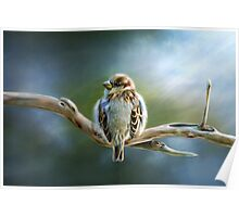 English-House Sparrow Poster