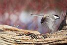 Fly thru - Drive thru Chickadee by Renee Dawson