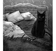 Cat BW Photographic Print