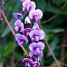 Purple Haze by DEB CAMERON