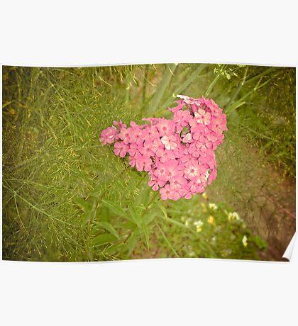 Heart-shaped flower Poster