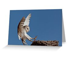 Australian Barn Owl Greeting Card