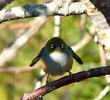 Do I look Like Happy Feet The Penguin? - Silver-Eye - NZ by AndreaEL