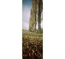 Ladybarn Park Photographic Print