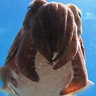 Cuttle Fish by Katie  Hollamby