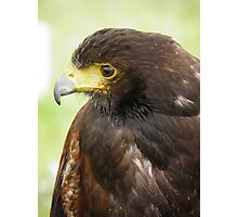 Birds of Prey Photographic Print