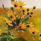 Woodland Sunflower by vigor