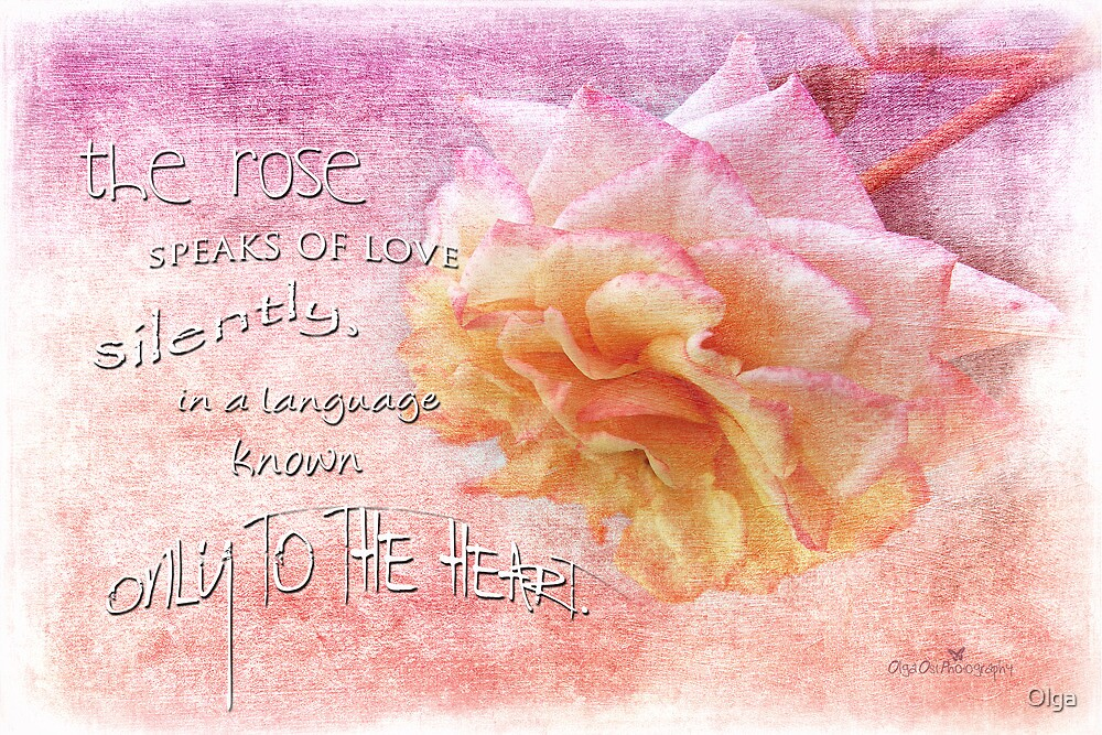 The rose... by Olga