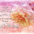 The rose... by Olga