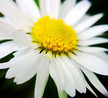 Nature's Daisy Face by mariamariamaria