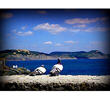 Pigeons Looking out to Sea Photographic Print