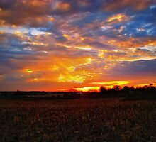 Sunset Over The Cornfield by Linda Miller Gesualdo