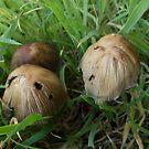 Fungi Groupies by sarnia2