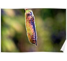Insect Blue Tailed Damselfly Poster
