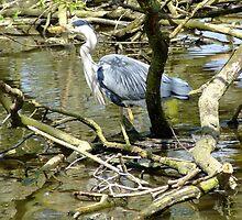 Grey heron by ivanfeltonglenn