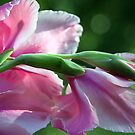 Glads from the Garden by RebeccaBlackman