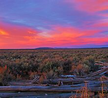 Taos Mesa Morning by Maggie Woods