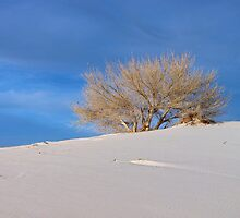 One Tree Dune, White Sands N.M. by Maggie Woods