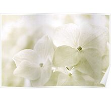 Taupe Hydrangea Poster
