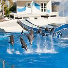 Dolphin and Whale Show-Sea World Orlando by lissie27