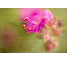 Wisp of Spring Photographic Print