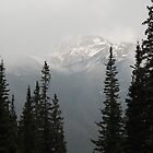 Mountainscape-Berthoud Pass, CO by lissie27