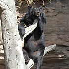 Hanging Around-Denver Zoo, CO by lissie27