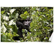 gorillas in the bush Poster