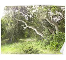 Old Oak Growth at Ft. Ord Poster
