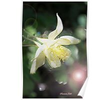 Magical Columbine ~ Must Be Fairies Poster